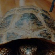 Tortoise lover 2000