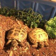 Gwen Loves Tortoises