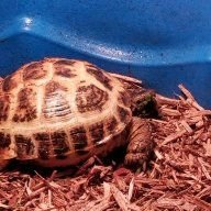Mort the Tort