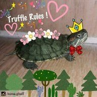 Truffle The RES