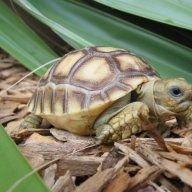 Totally_Tortoise