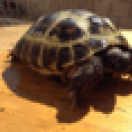 TortoiseBoy1999