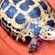 Turtlepete