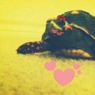 Turtletots