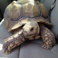 turtletopia81