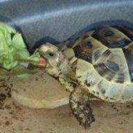 TurtleTortoise