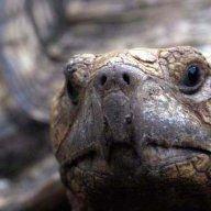 HI Tortoise Rescue