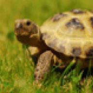 tortoiseplanet