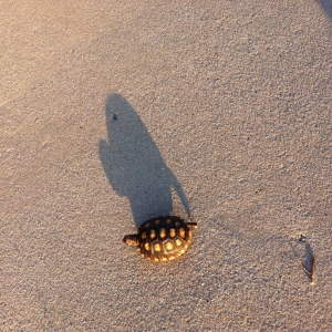 Tortoise-shaped shadow