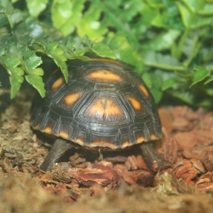 Tortoise butts are adorable.