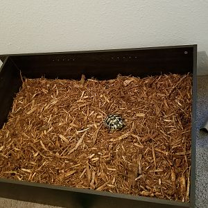 Mulch added plus tort for scale