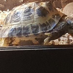 another picture of my Tortoise Bob