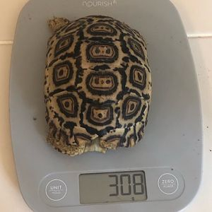 308 grams at 11  months