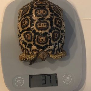 371 grams at 1 year old