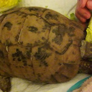 Our tortoise.. weve had her 42 years