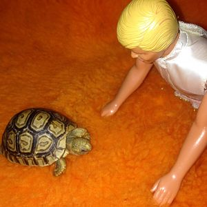 Ken vs adorable leopard tortoise