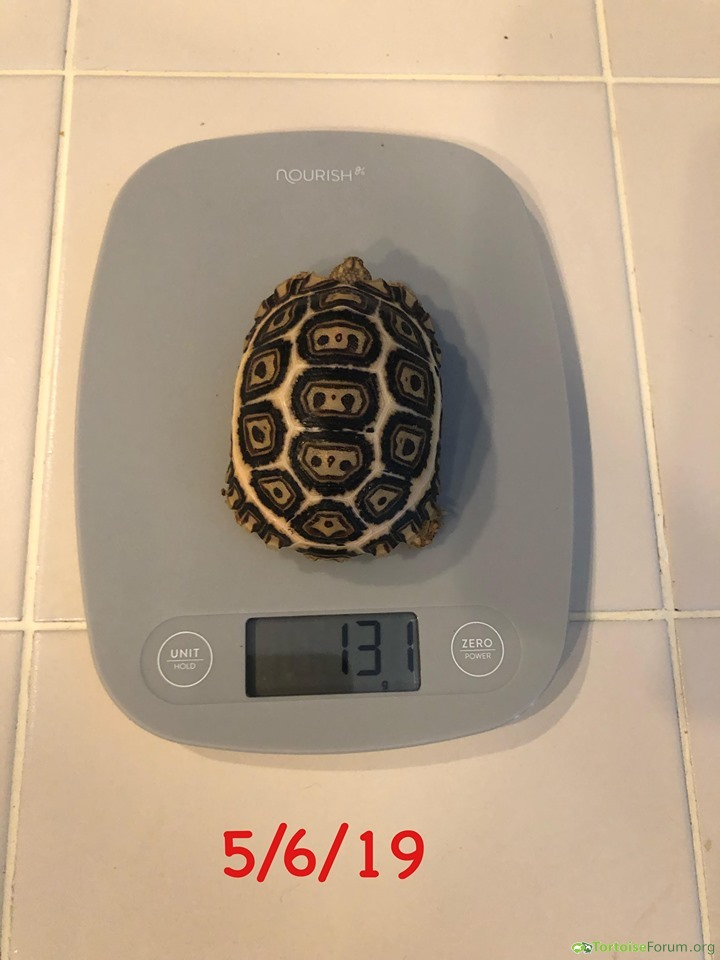 131 grams at 7 months